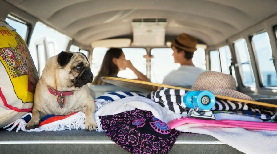 owner with their dog travelling in a surf van