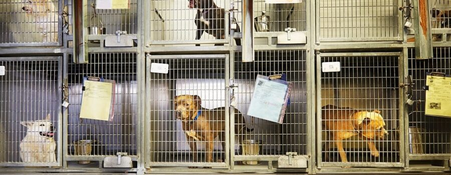dogs in cages in an animal shelter
